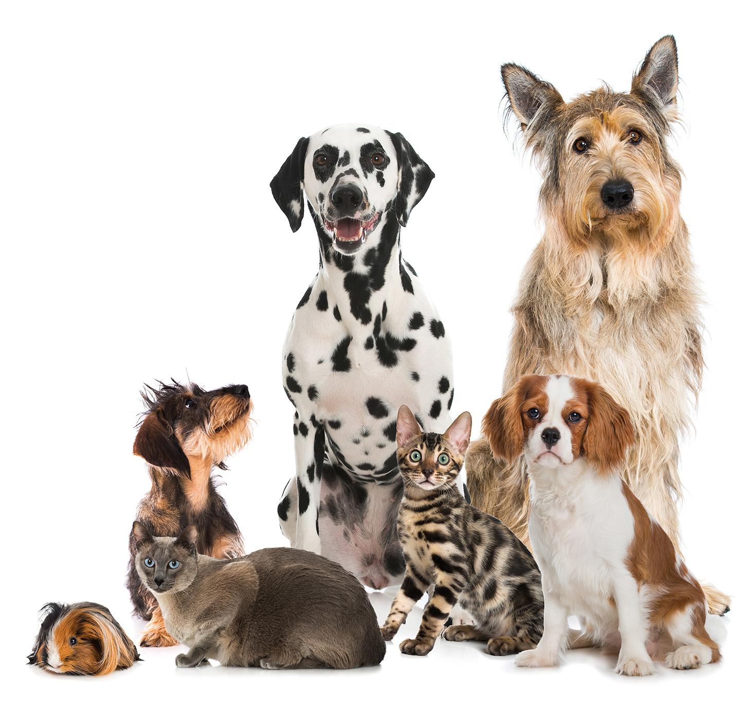 Hunde, Katzen und ein Meerschwein